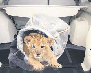 Yorgan altından aslan çıktı!