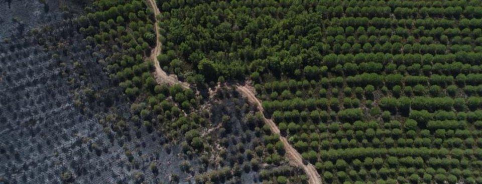 Ayvalıkta yanan ormanlık alan böyle görüntülendi