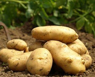 Patatese destek