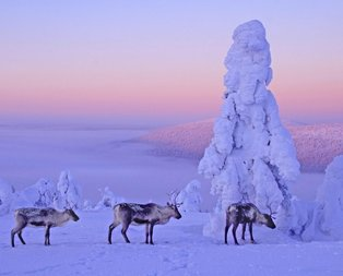 Muhteşem kar manzaraları