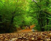 İstanbulun en iyi ormanları
