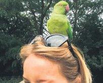 Başına talih kuşu kondu