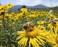 Toplu arı ölümleri korkutuyor! İşte ölümlerin sebebi...