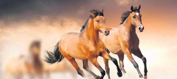 Atların güzelleri!