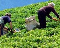 Çaykur'a bin 500 yeni işçi