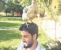 Baştacı tavuk