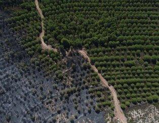 Ayvalık'ta yanan ormanlık alan böyle görüntülendi