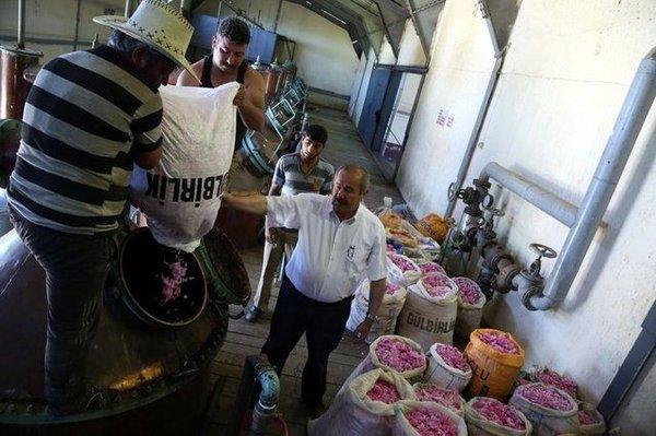 Gül yağının kilogramı 12 bin eurodan satılıyor!