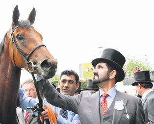 At koşar şeyh kazanır