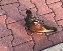 Silivri Cezaevinde haberci kuş yakalandı