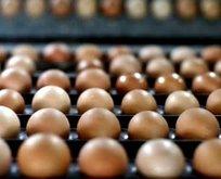 Yumurta fiyatı yarıya düştü
