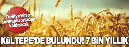 7 bin yıllık buğday Marmaris'te umut oldu