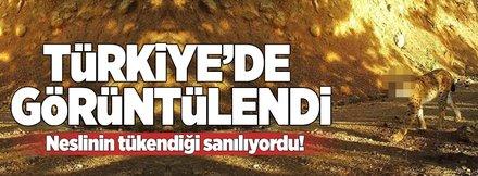 Türkiye'deki yaban hayatı böyle görüntülendi
