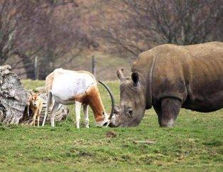 İşte hayvanlar alemindeki en vahşi karşılaşmalar