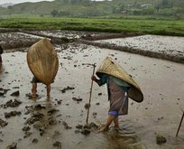 Dünyanın en yağmurlu şehri: Cherrapunji