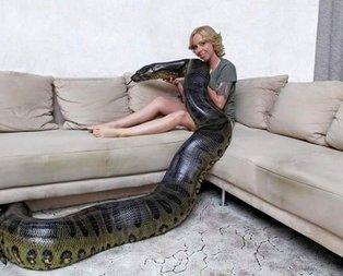 Dev yılanla aynı evde yaşıyor!