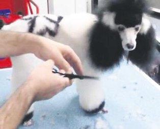 Köpeği maymun etti