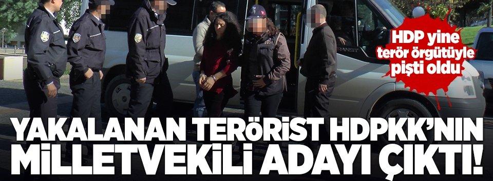 PKKlılardan biri HDPli milletvekili adayı çıktı