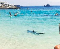 Akdeniz'de Jaws paniği